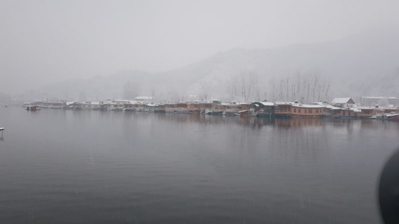 Timless gray beauty of Kashmiri Winter