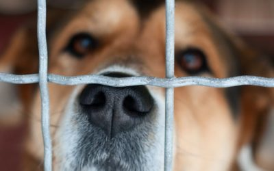 People hate cruelty to animals, so why do we do it?