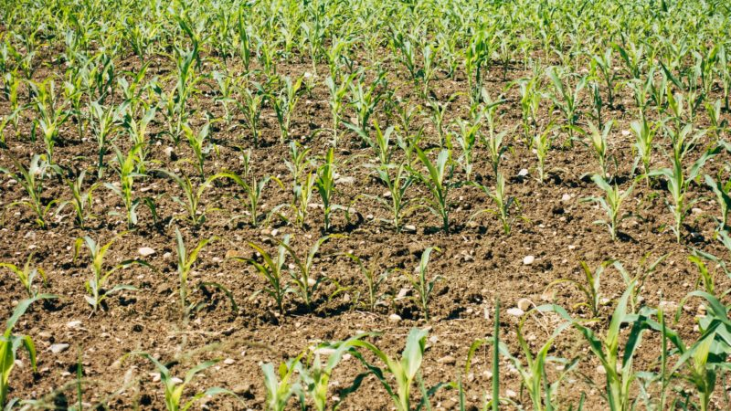 Continuous use of nitrogenous fertilizer damages soil health