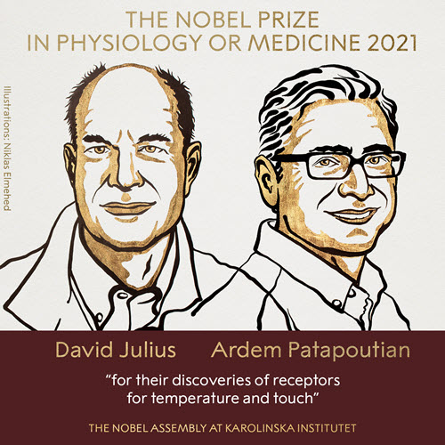 David Julius and Ardem Patapoutian won  the Nobel Prize in Physiology or Medicine 2021